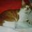 The profile image of itsumi0616