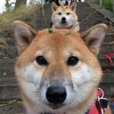 思わずニヤける犬画像♡ (@00_gif) Twitter