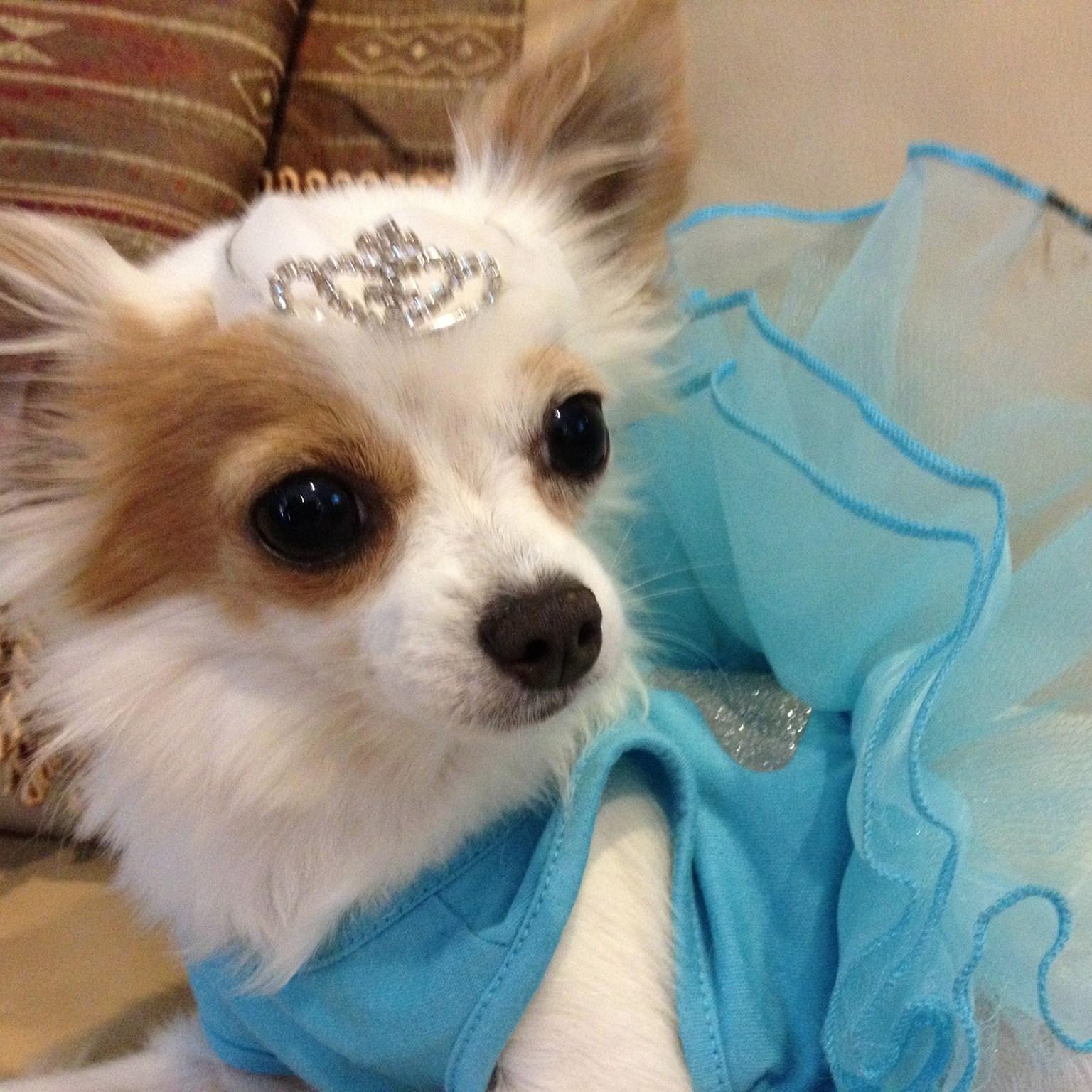 Princess Ava Bisou