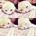 猫のめい。 (@0703ndmei) Twitter