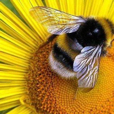 ☭ Пчела 🐝 ☭ (@pchela12)