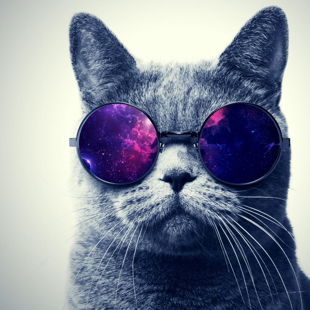 всего картинки крутого кота рисунки если она надевает