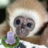 monkey529