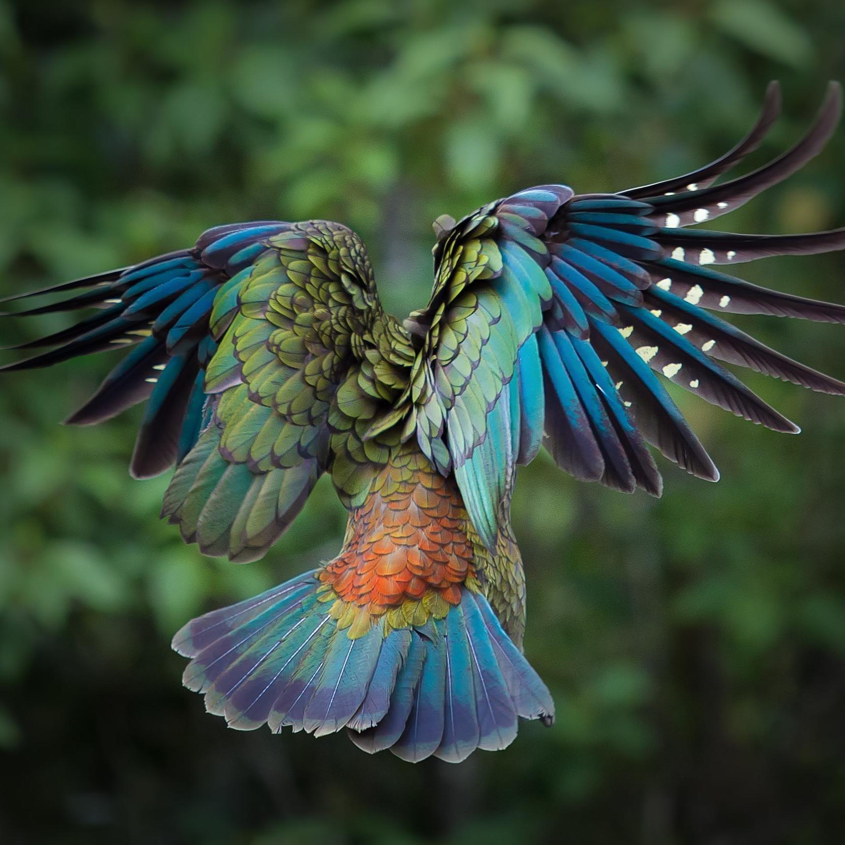 Amazing Pictures: Amazing Nature (@endangeredbot)