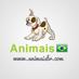 @animais_brasil