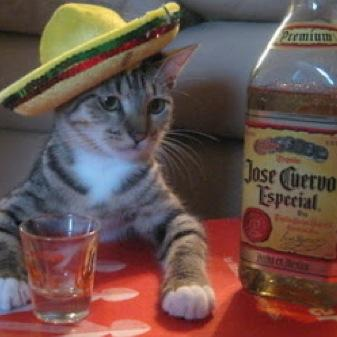 Mexican Cat (@JoshBooth14) | Twitter