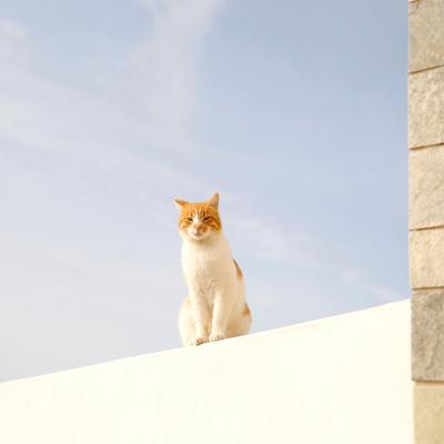 猫ちゃんグッズ王 @fanikySig