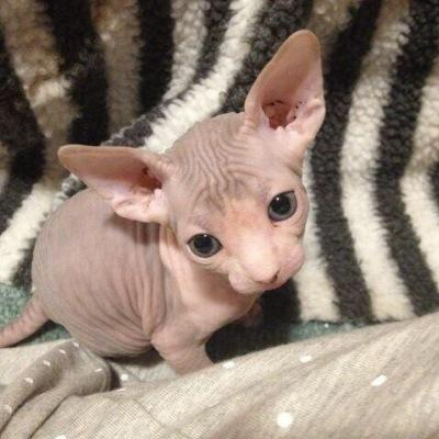 All hairless