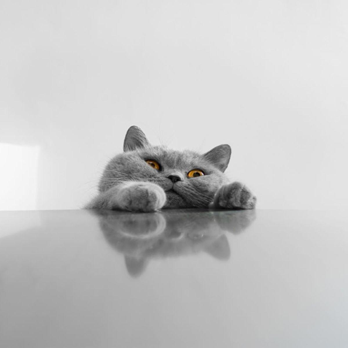 забавный котенок без смс
