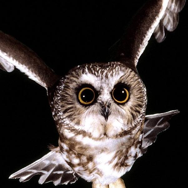 owl who was god Mla (modern language association) style is most commonly used to write papers and cite sources within the liberal arts and humanities this resource, updated to.