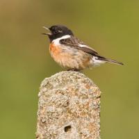 Wildlife Sightings (@wildlife_uk )