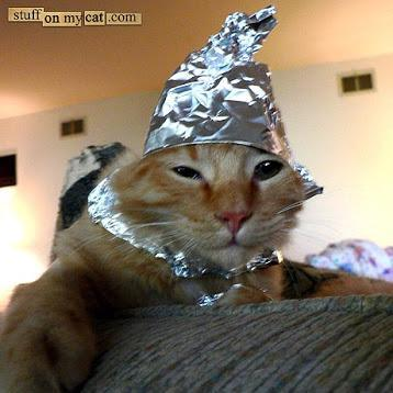 Video Of A Cat In A Tinfoil Hat On