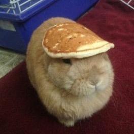 things on a rabbit thingsonarabbit twitter