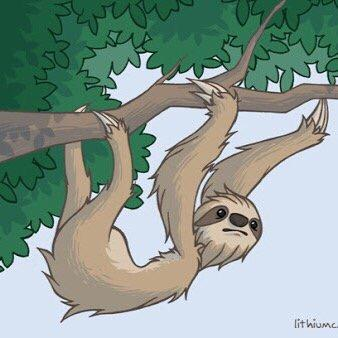 Sloth Facts (@SIothFacts) | Twitter