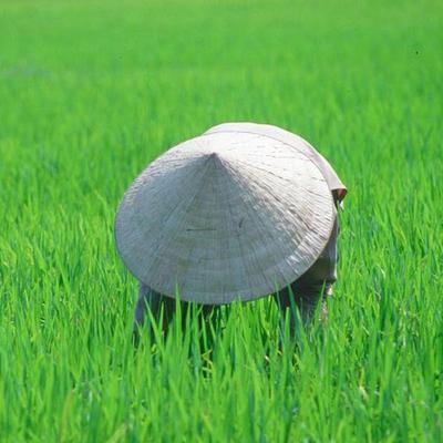 travel to vietnam experience,vietnam travel experience
