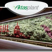 Aktaş Plant Group