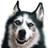 DepressedHusky's avatar