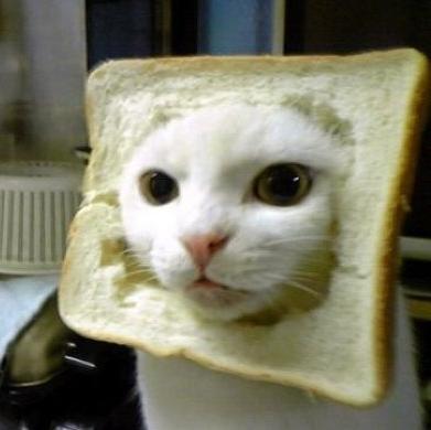 面白い動物食パンマン猫
