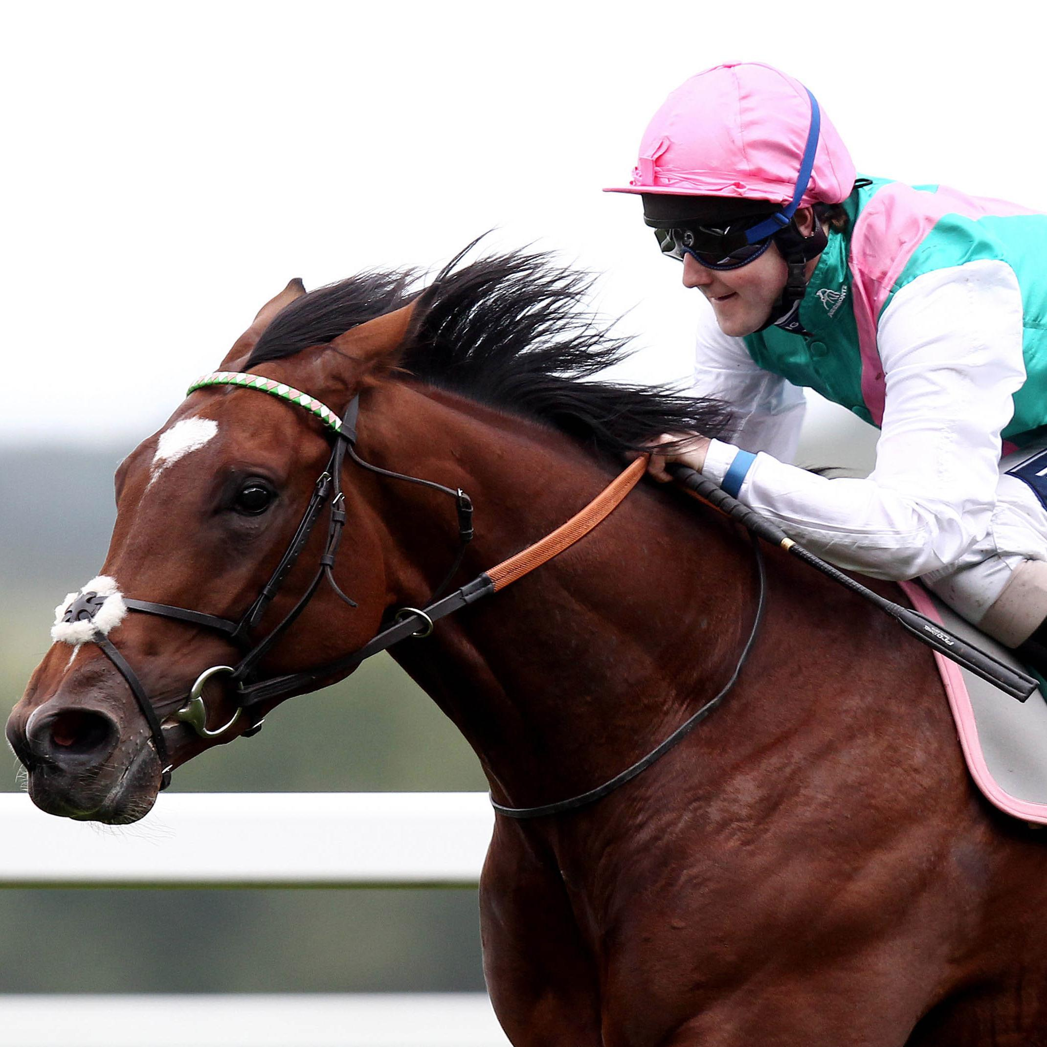 Horse racing betting tips twitter donald dead heat rules in golf betting tips