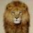 Soft__Lion