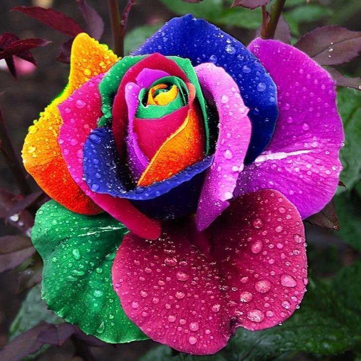 Flores exóticas (@MilesDeFlores) | Twitter
