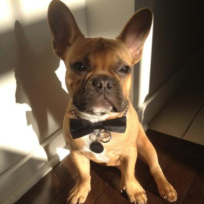 Carlos The Frenchie on Twitter: \