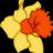 Daffodil Africa