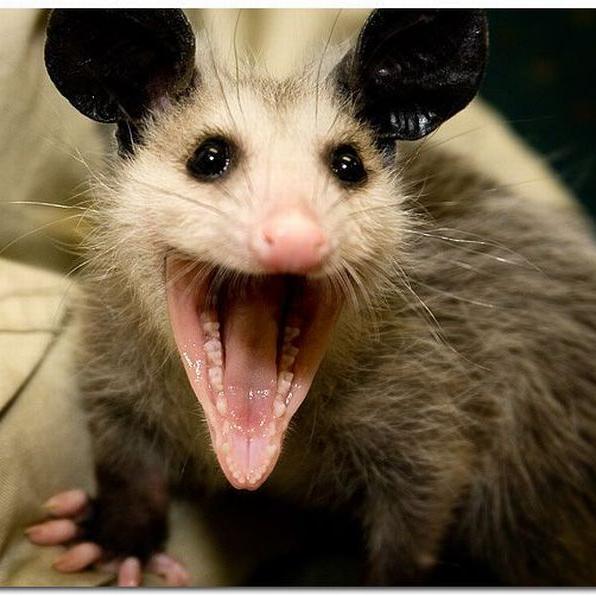 Ballast Possum on Twitter: