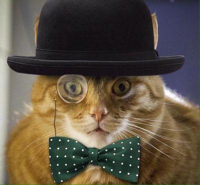 Johnny coolcat