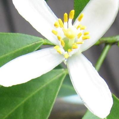 Mrs Green Thumb On Twitter Really Bug Biting Plants Terrarium Set