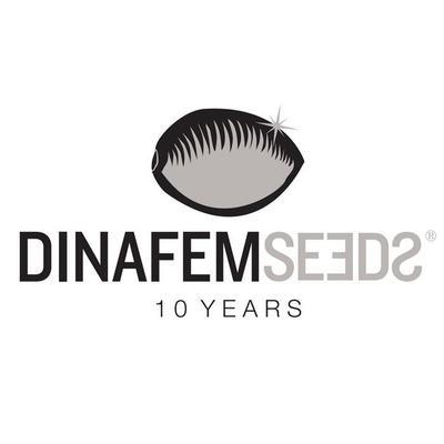 @DinafemFr