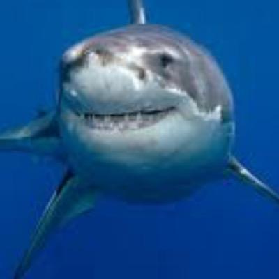 Katharine The Shark