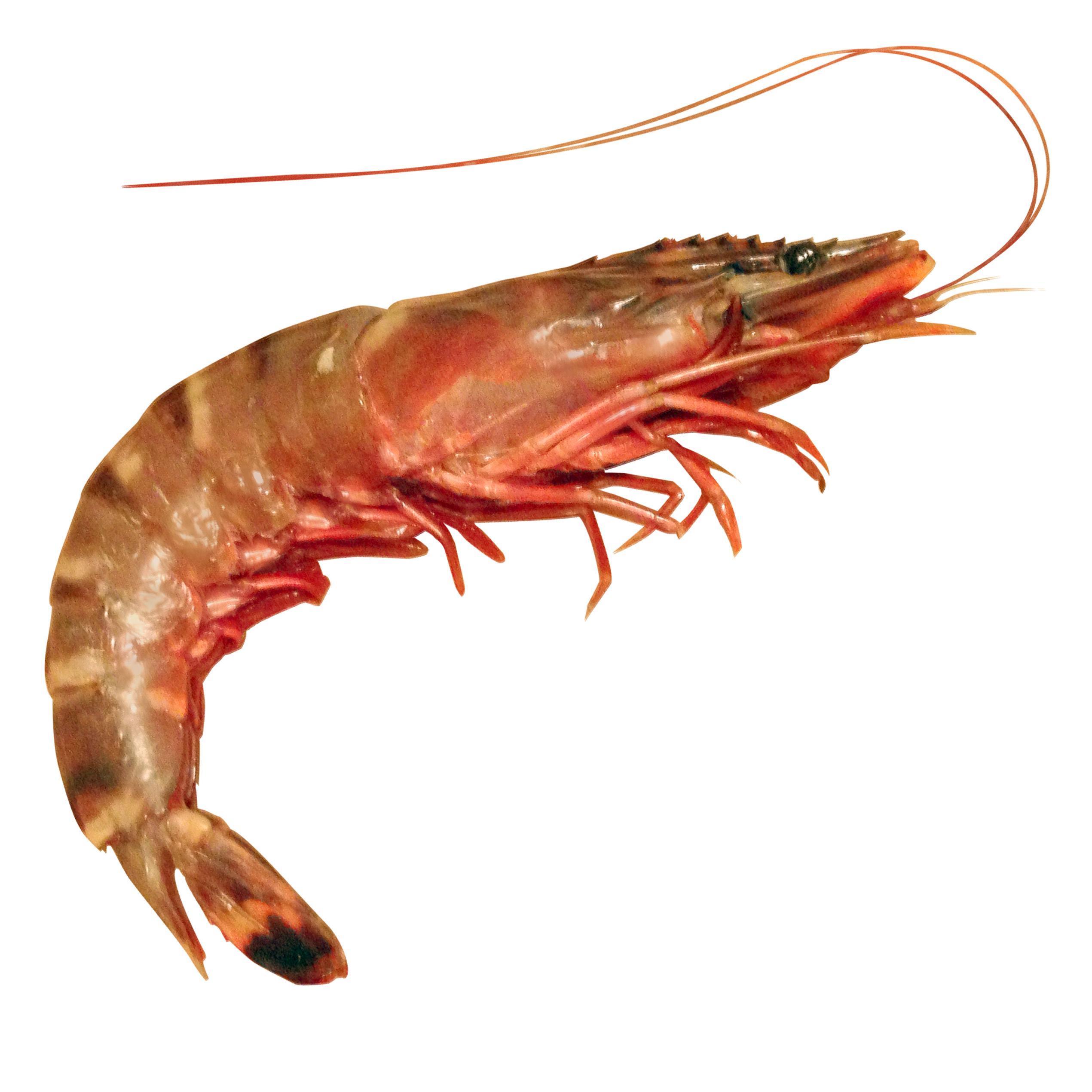 Shrimp (@shrimptext) | Twitter