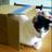 @sakamoyo0224 Profile picture
