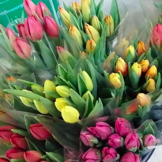 Orangeville Flowers