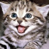 Image of: Gif People View All Tahheetchcom Caturdaycuties Hashtag On Twitter