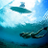 #Swim #Dive & #Surf