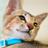 Have you seen my #kitten nose ? #catnose #kitty #cat #sleepycat #sleepingcat