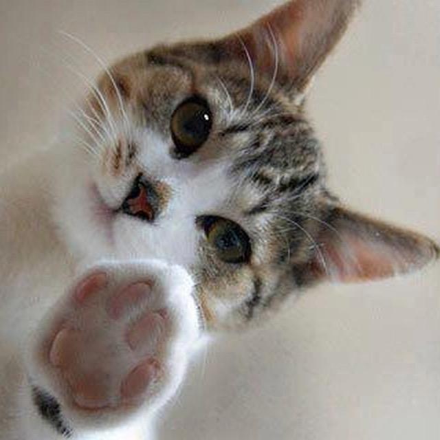 Amor Por Los Gatos At Porgatos Twitter