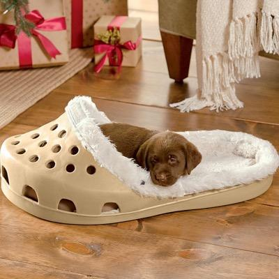 Exotic Dog Beds