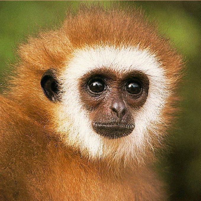 Monkey Memes On Twitter Hitman Monkey Now Has Henchman Monkeymemes Http T Co Zjoxwcxedt