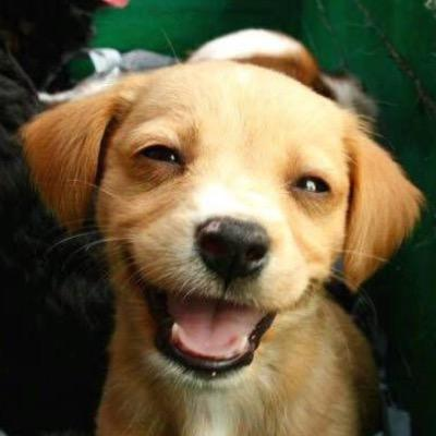 Puppies Forever At Puppiesforever Twitter
