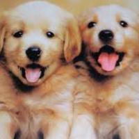 We Adore Puppies