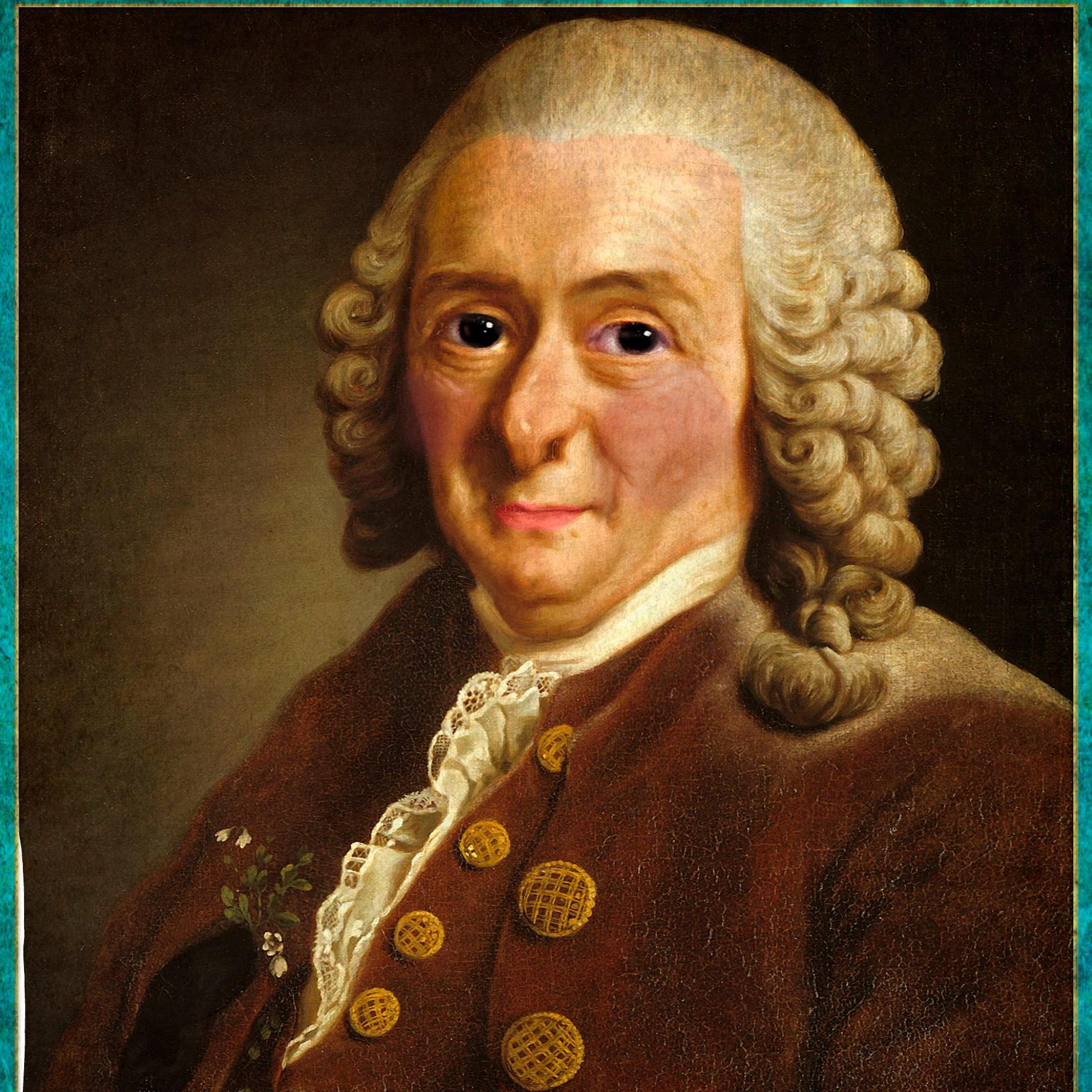 carolus linnaeus The flower expert - flowers encyclopedia speaks about carl linnaeus the  flower expert also highlights carl linnaeuscontributions to the world of botany  and.