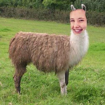 Daily Llama Updates At Dailyllama10 Twitter
