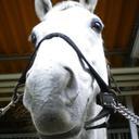 @mana_horse
