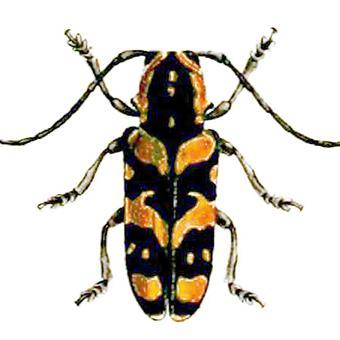 insects unlocked insectsunlocked twitter