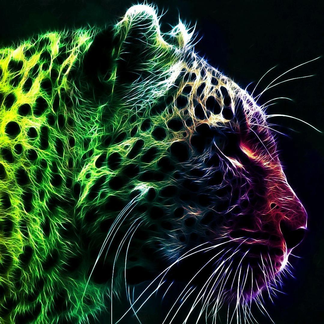 Kinetic Meow