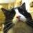 griffin_stewie