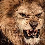 Crazy Lion